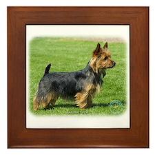 Australian Terrier 9R044D-62 Framed Tile
