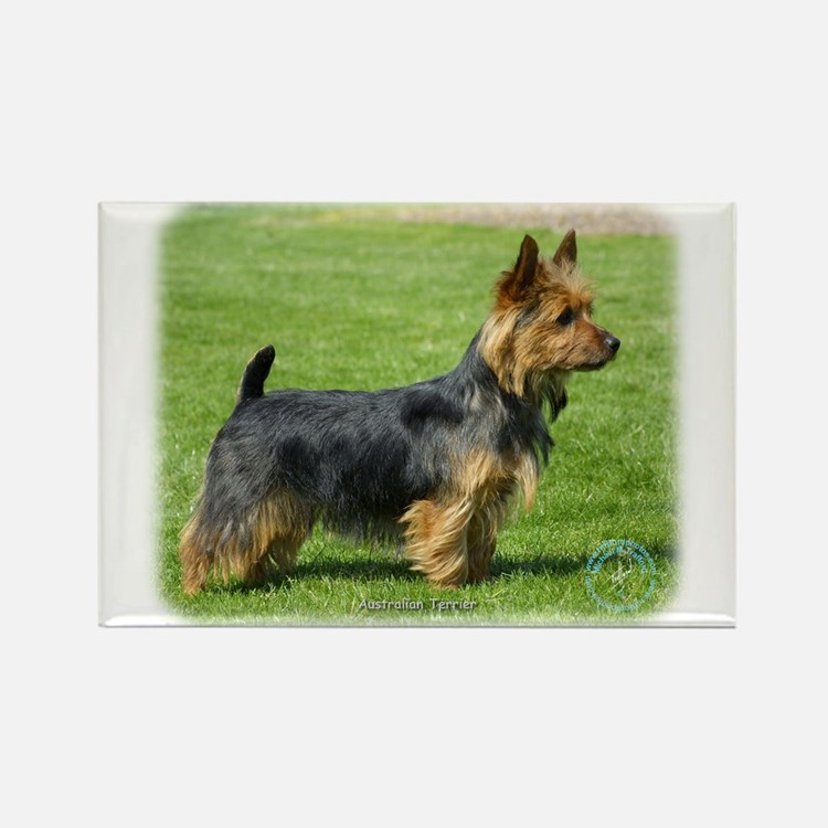 Australian Terrier 9R044D-62 Rectangle Magnet