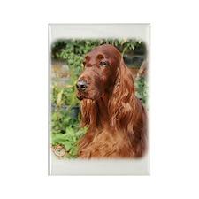 Irish Setter 9Y209D-090 Rectangle Magnet (100 pack