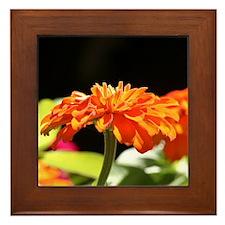 Orange Flower Framed Tile