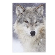 Snow Bound Postcards (Package of 8)