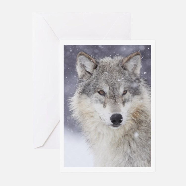 Snow Bound Greeting Cards (Pk of 20)