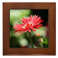 Red Flower Framed Tile