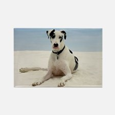 GREAT DANE BEACH Rectangle Magnet