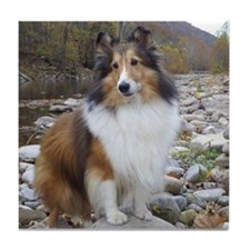 Sable Sheltie Hiker Tile Coaster