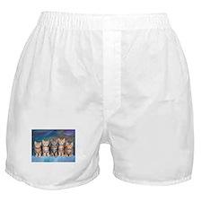 Cute Ocicat Boxer Shorts