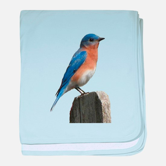 Eastern Bluebird baby blanket