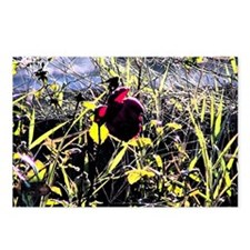 Red Rosy Stain Postcards (Package of 8)