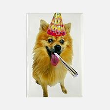 Pomeranian Birthday Rectangle Magnet