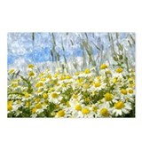 Daisy Postcards