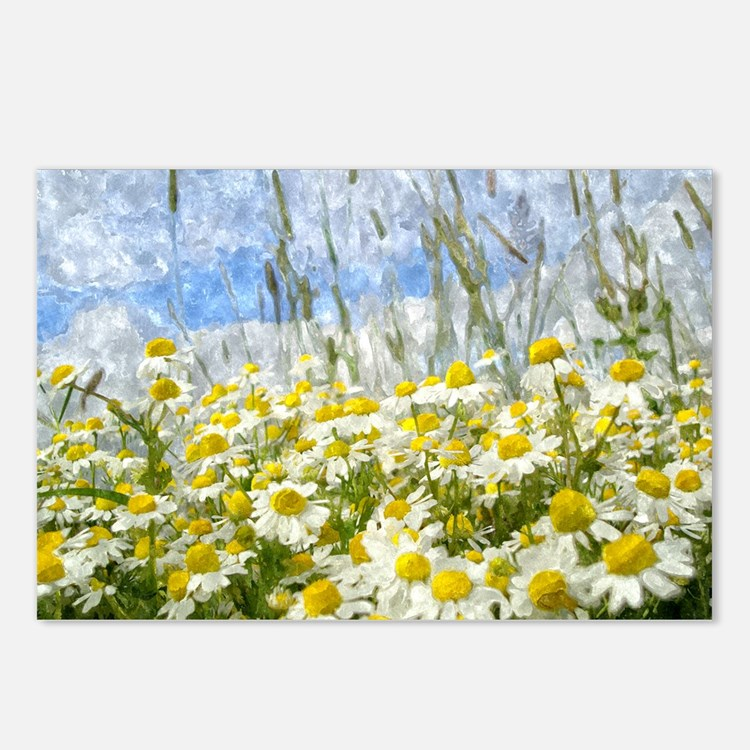 Painted Wild Daisies Postcards (x8)