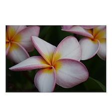 Cute Tropical flowers Postcards (Package of 8)