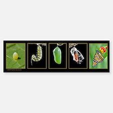 Monarch Metamorphosis Bumper Bumper Sticker