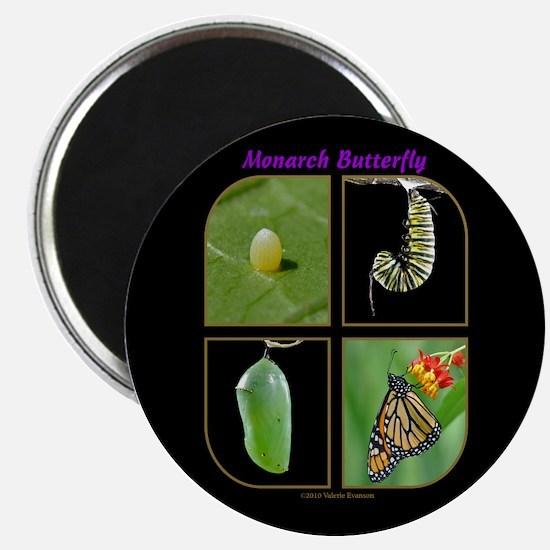 Monarch Metamorphosis Magnet