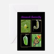 Monarch Metamorphosis Greeting Card