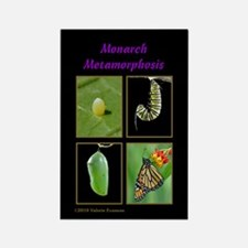 Monarch Metamorphosis Rectangle Magnet