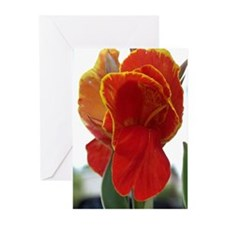 Cana Lilly Greeting Cards (Pk of 10)