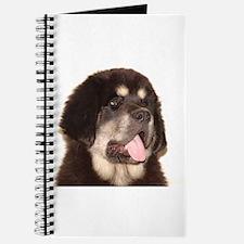 Cute Tibetan mastiffs Journal