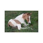 Sleeping foal 38.5 x 24.5 Wall Peel
