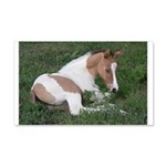 Sleeping foal 22x14 Wall Peel
