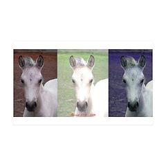 Horse Patriot 38.5 x 24.5 Wall Peel