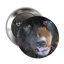 """Cats & Dogs 2.25"""" Button (100 pack)"""