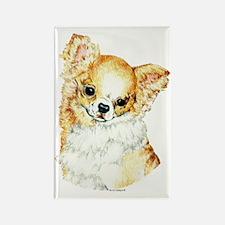Long Coat Chihuahua Rectangle Magnet