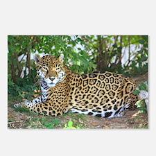 Jaguar Postcards (Package of 8)