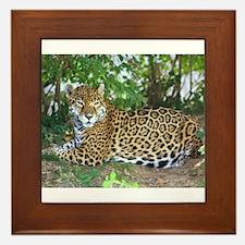 Jaguar Framed Tile