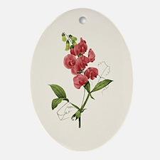 Provencal Natural Sweet Pea Ornament (Oval)