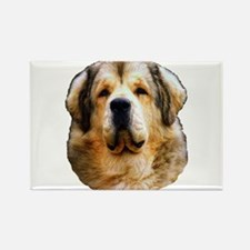 Cute Tibetan mastiff Rectangle Magnet