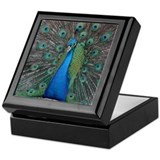 Bird photo Square Keepsake Boxes