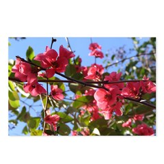 Flowering Quince Postcards (Package of 8)