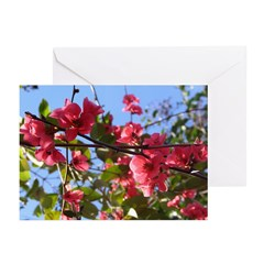 Flowering Quince Greeting Cards (Pk of 10)