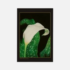 Calla Lily Rectangle Magnet (100 pack)