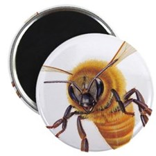 """New Section 2.25"""" Magnet (10 pack)"""