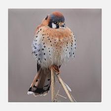 Little Falcon Tile Coaster