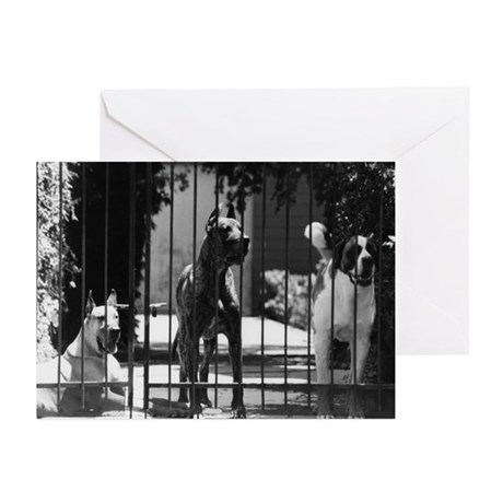 Dogs - Greeting Cards (Pk of 10)