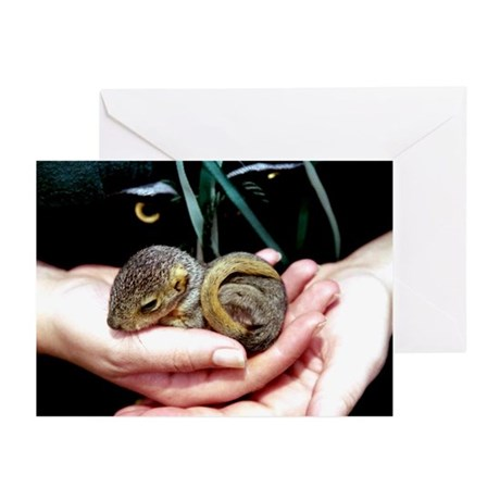 Baby Squirrel - Greeting Cards (Pk of 10)