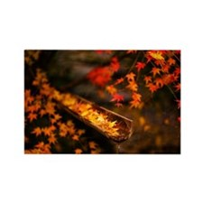 Autumn Maple - Rectangle Magnet