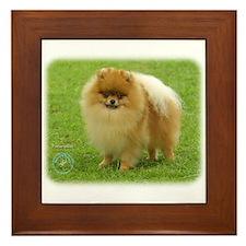 Pomeranian 8T087D-06 Framed Tile