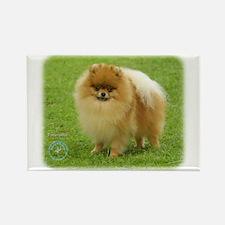 Pomeranian 8T087D-06 Rectangle Magnet