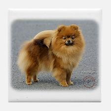 Pomeranian 9R042D-22 Tile Coaster