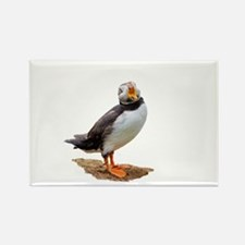 Funny Atlantic puffin Rectangle Magnet