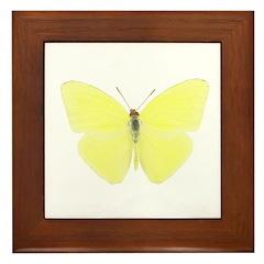 Butterfly 8 Framed Tile