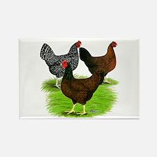Dark Brown Egg Hens Rectangle Magnet