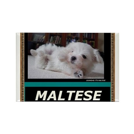 Diamond J's Maltese Diamond J S Maltese Rectangle