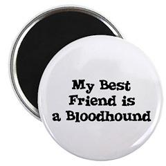 My Best Friend is a Bloodhoun Magnet