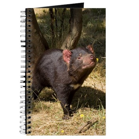 tasmanian devil how to help