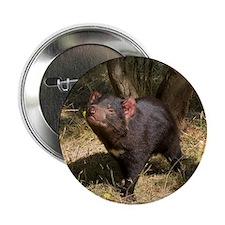 """Tasmanian Devil 2.25"""" Button (100 pack)"""